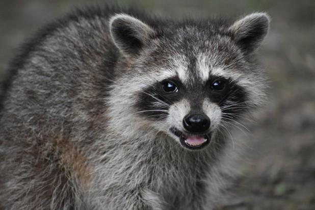 Rabid Animals in Texas
