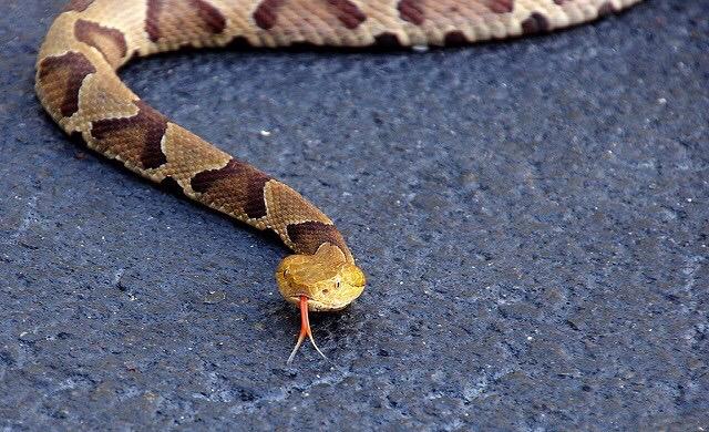 Dangerous Snake Bites Toddler