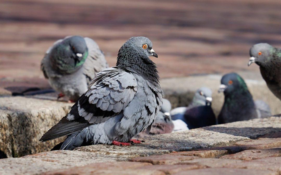 Invasive Bird Species At Risk of Extinction