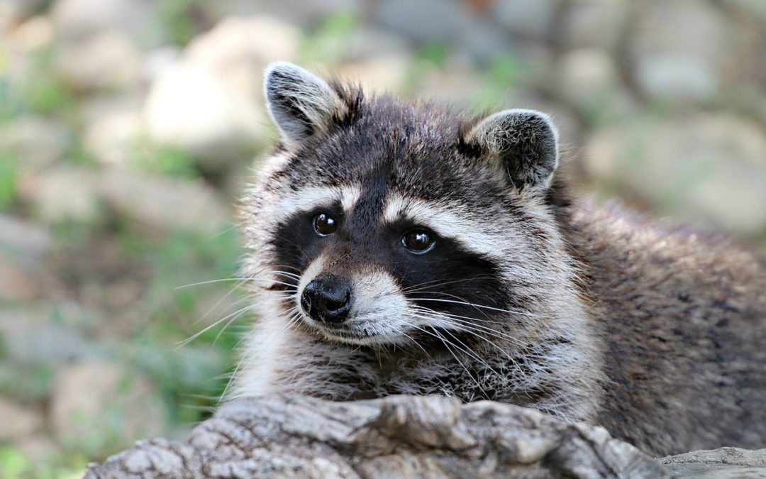 Rabies Vaccines Dropped in Texas